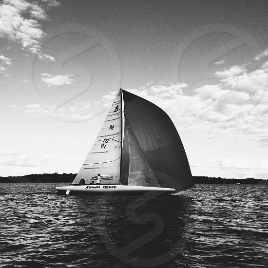 black and white photo of sail boat called animal house on water\ photo