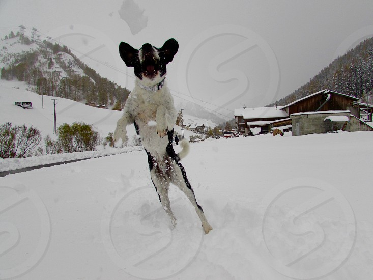 Dog of snow photo