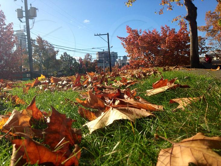 Seattle fall photo