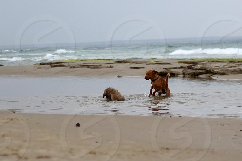 dogs on seashore photo