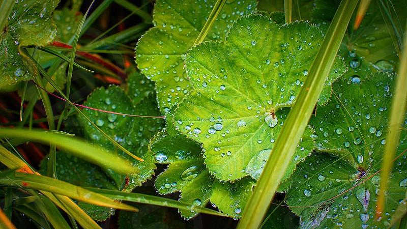 green scallop leaf plant photo