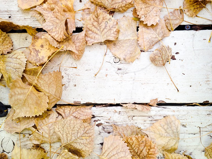 Fall leaves on white distressed wood deck photo