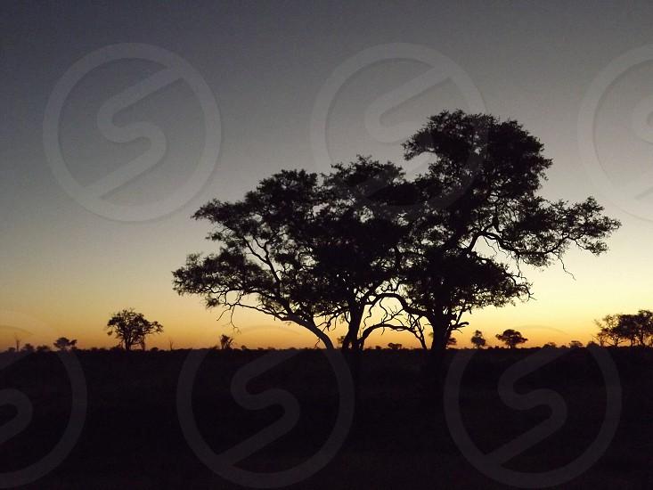 Sunset on Safari in Botswana: real life lion king: June 2012 photo