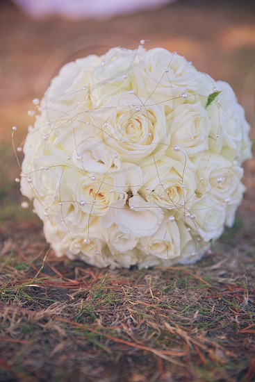 Bride's bouquet sitting on pine needles & grass. photo