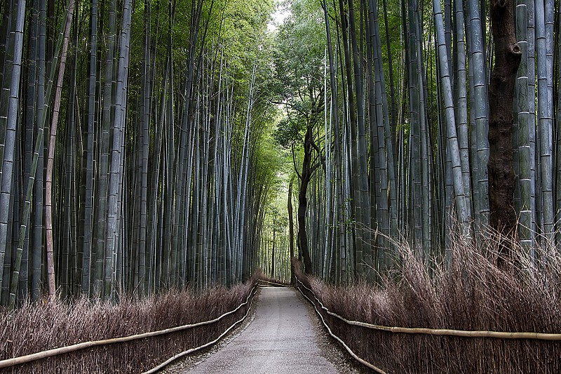 Arashiyama Bamboo Grove photo
