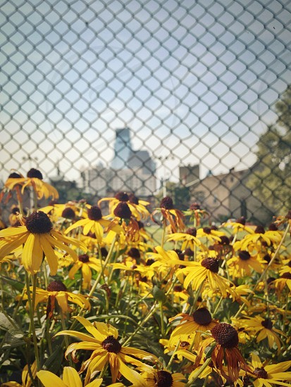 Flowers with Philadelphia skyline in background. Spring Garden neighborhood. photo