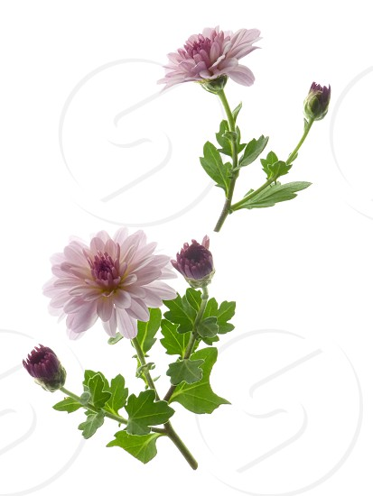 white and purple flowering plant photo