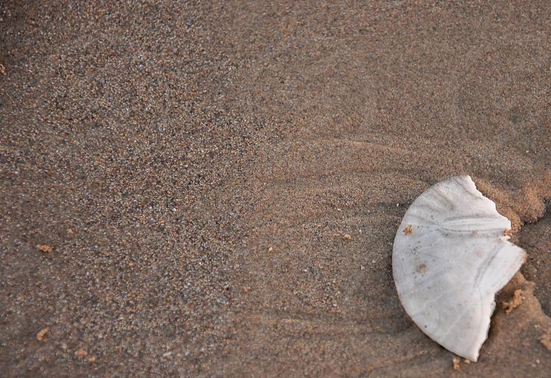 broken sand dollar laying on the beach photo