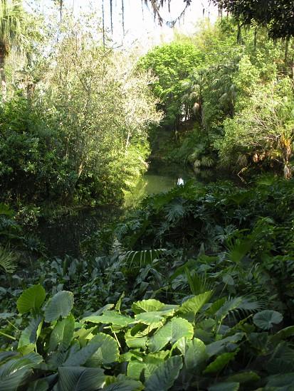 Rainforest forest jungle botanical plants wallpaper background backdrop photo