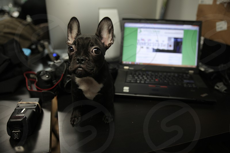 dog desk office business work employee photo