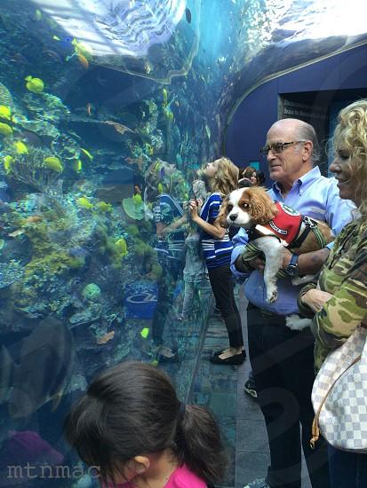 Service dog aquarium people lifestyle weekend photo