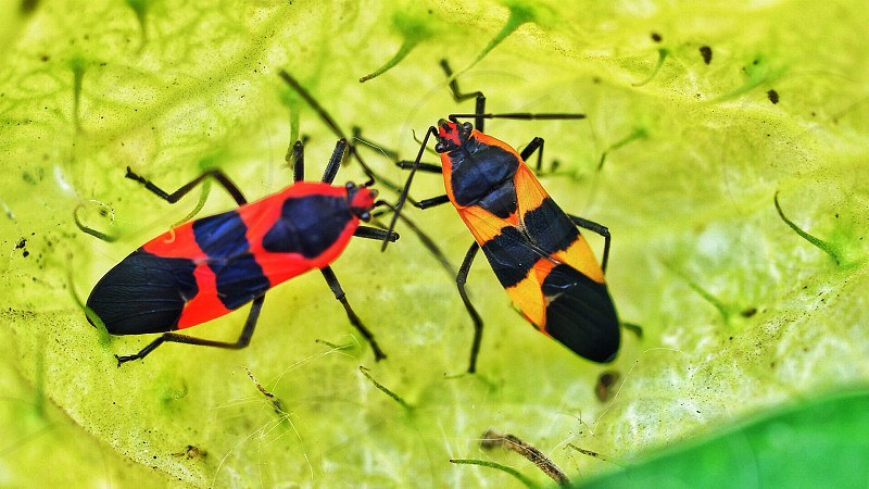 Brightly colored. Insects.  photo
