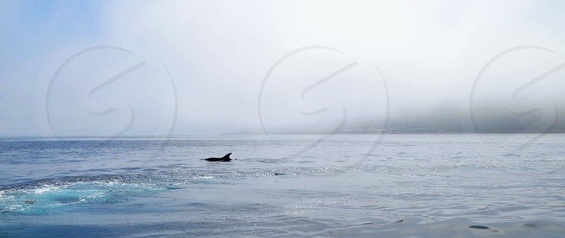 Blue ocean with sea life photo