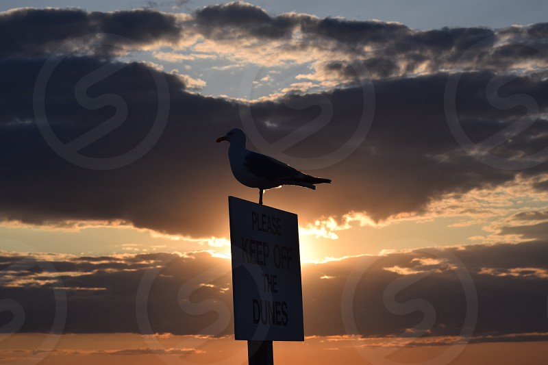 silhouette photo of bird perched on signed during golden hour photo
