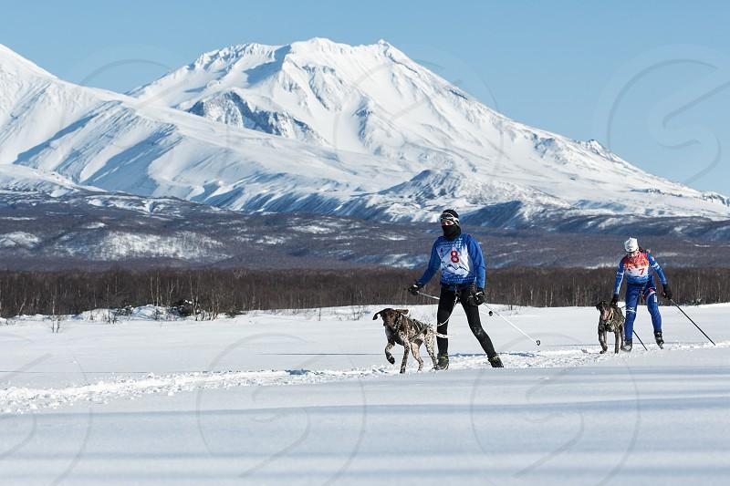 PETROPAVLOVSK-KAMCHATSKY KAMCHATKA PENINSULA RUSSIA - DECEMBER 10 2016: Skijoring - competition for Cup of Kamchatka Region on background of beautiful Kozelsky Volcano. photo