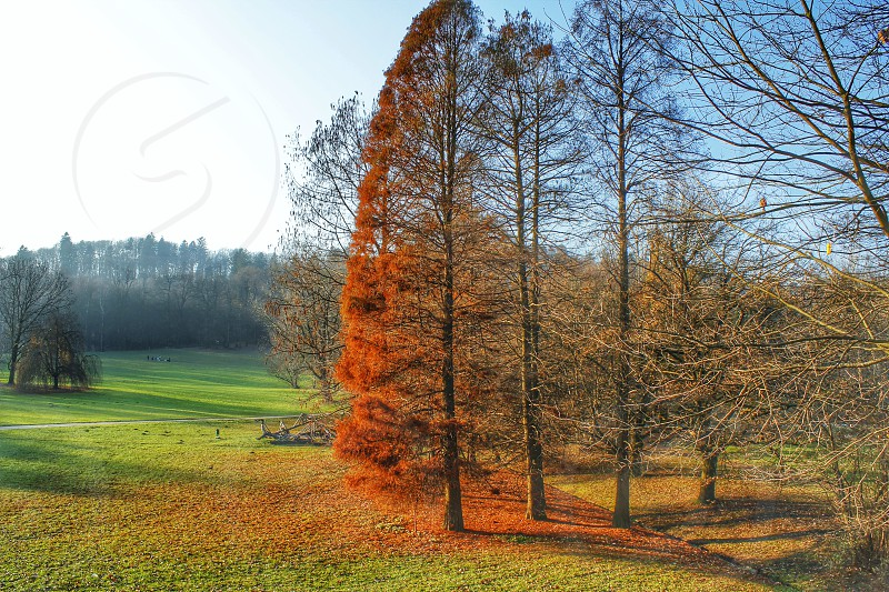 Signs of autumn  photo
