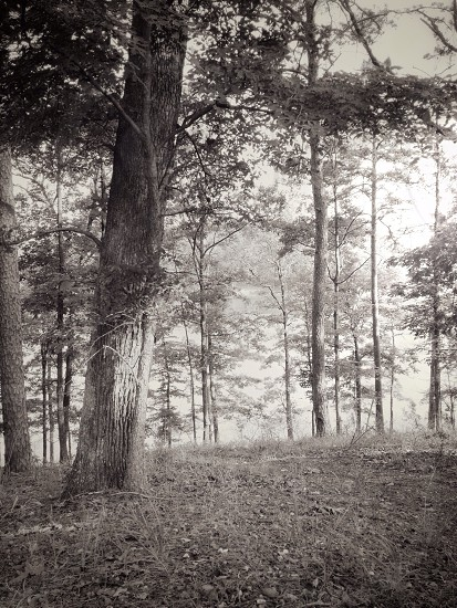 forest gray scale photography photo