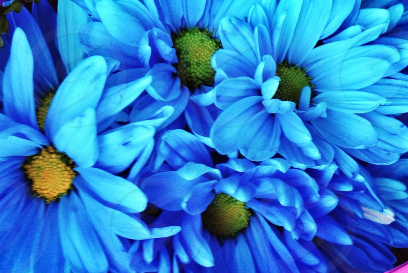 blue and green flower photo