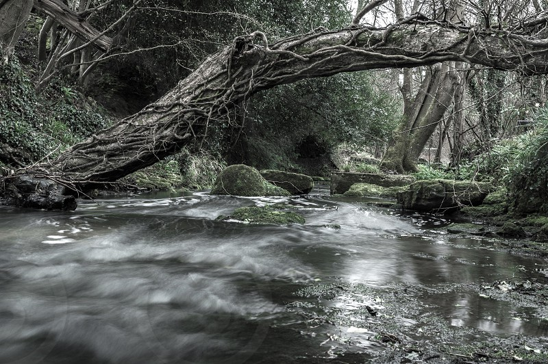 River stream wood woods woodland flowing muted England countryside  photo