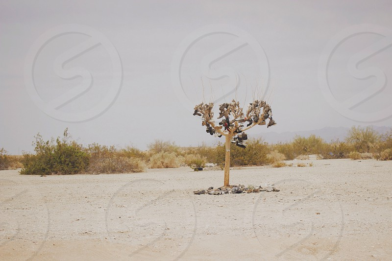 tree on desert photo