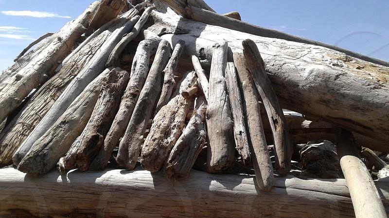 Ruby Beach WA State driftwood photo