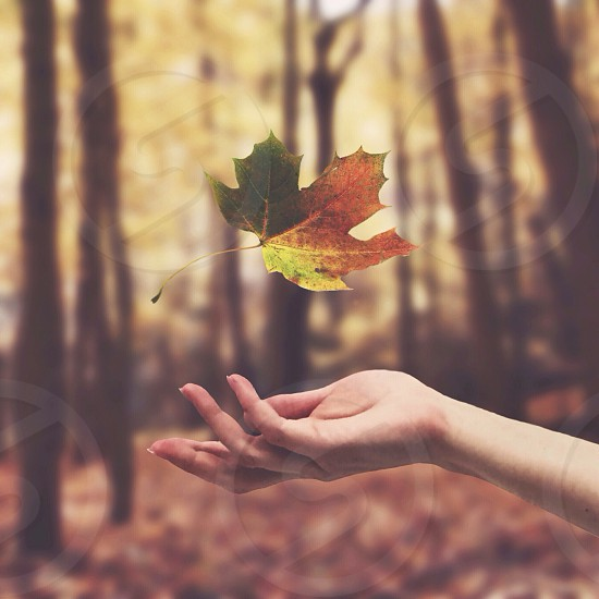 person catching a falling green and yellow leaf in the woods photo