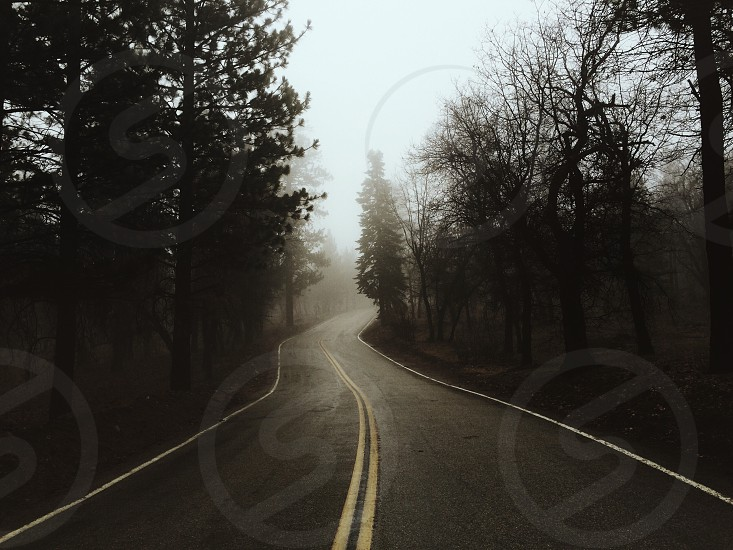 Forest roads  photo