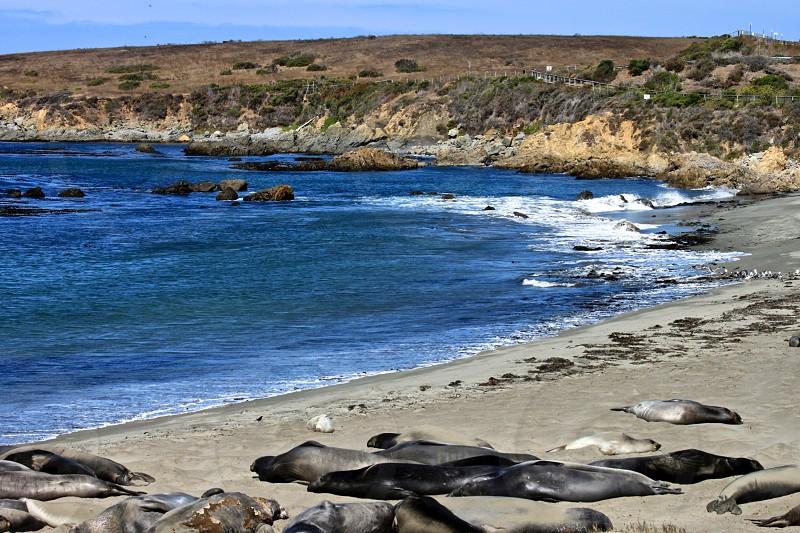 rock plats by the seashore photo