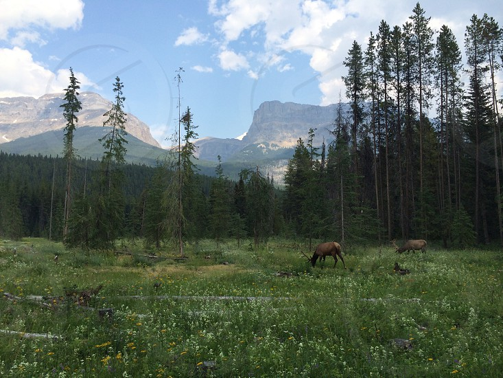Wildlife and nature. photo