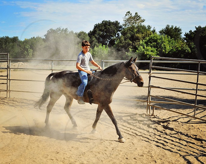 Young boy learning to ride Bay Morgan Horse bareback in dusty round pen on sunny day. photo