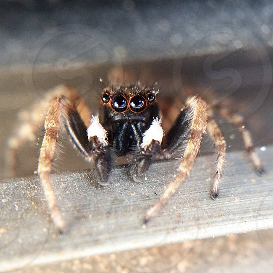 Macro of a spider photo
