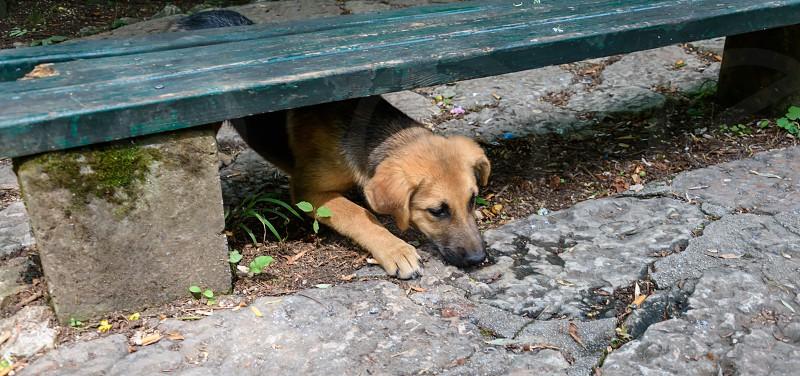 Dog lying under the bench photo