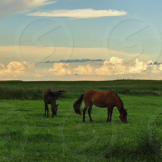 two horse on green field photo