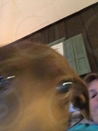 Puppy selfie photo