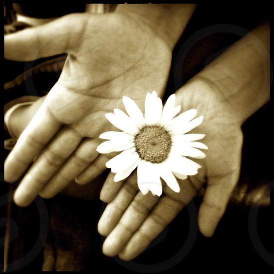 White Flower in Hand photo