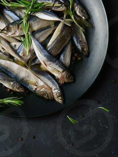 fish with rosemary photo