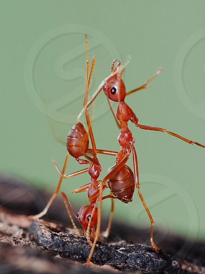 Ant in action                           photo