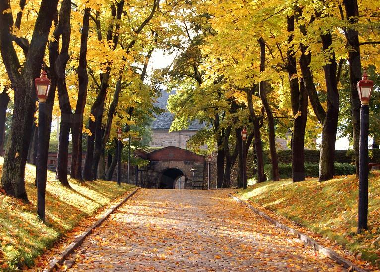 pathway panoramic photography photo