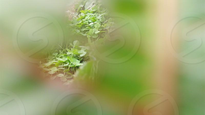 Photo taken through holes on a leaf. photo
