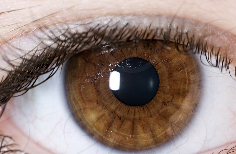 Macrophotography of a brown eye of a girl. Horizontal shot photo