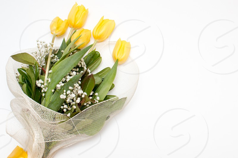 Yellow Tulips Bouquet Flowers Isolated In White Background photo