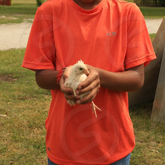 Holding a baby chick. photo