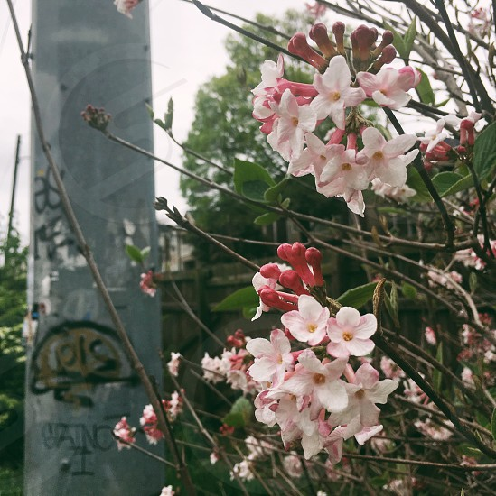 Urban nature graffiti grit contrast pink flowers city nature photo