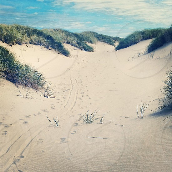 white sand with green plants photo