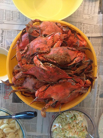 cooked crabs on yellow bowl photo