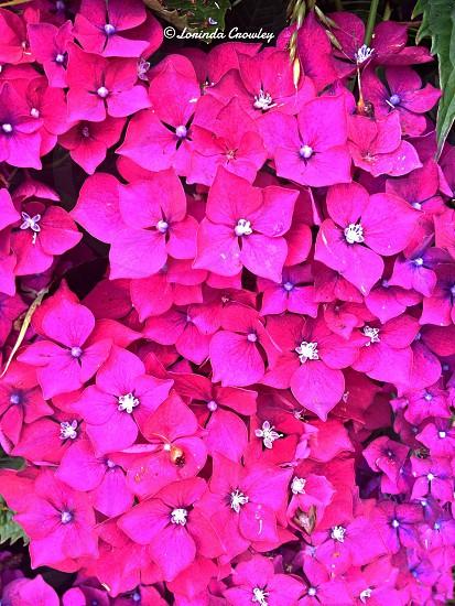 Beautiful pink flowers  photo
