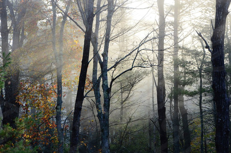 Fog trees morning nature photo