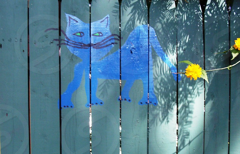 Blue Cat Painting on Patterned Back fence photo
