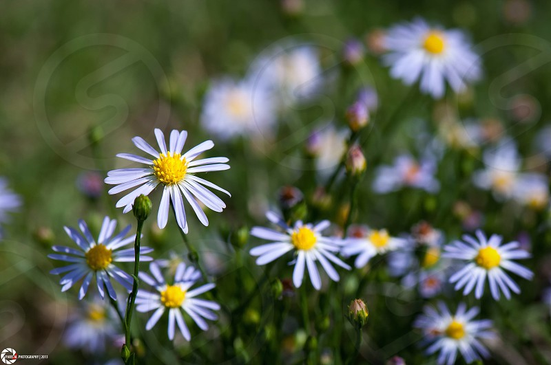 Wild flowers.  photo