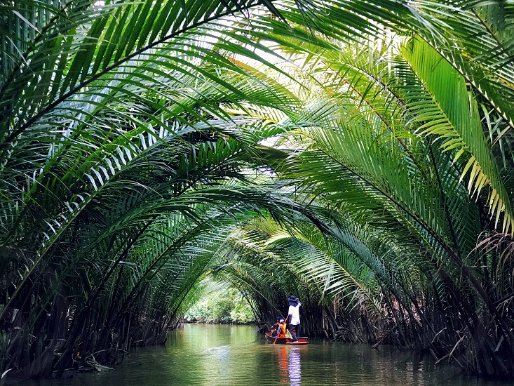 ecotourism boat rowing tunnel nipapalm nipa palm plant river canal water tourist suratthani south Thailand tourism photo